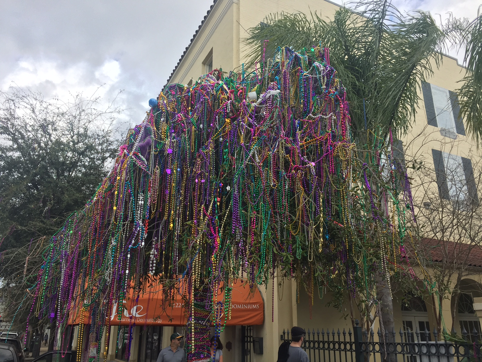 Note the weird phenomenon of trees along Mardi Gras parade routes suddenly blooming. All photos by Bob Thomas.