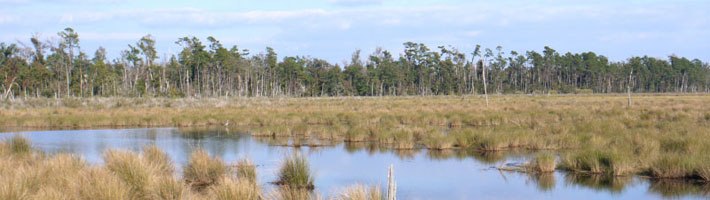 Louisiana coastal marsh landscape.